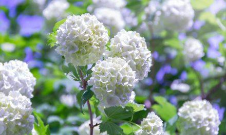 Roseum maakt van je tuin een lusthof