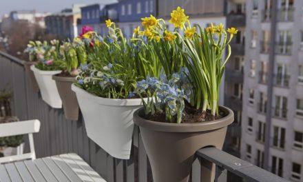 Maak van je balkon een schitterende bloementuin
