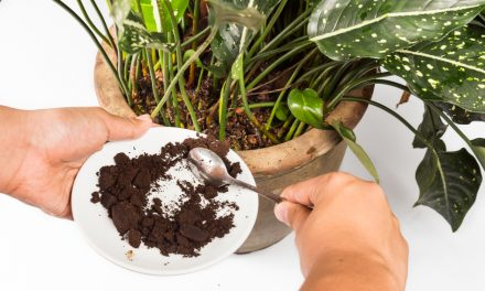 Waarom je bloemen en planten ook van koffie en thee houden