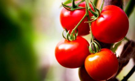 Zo rijpen je tomaten nog sneller
