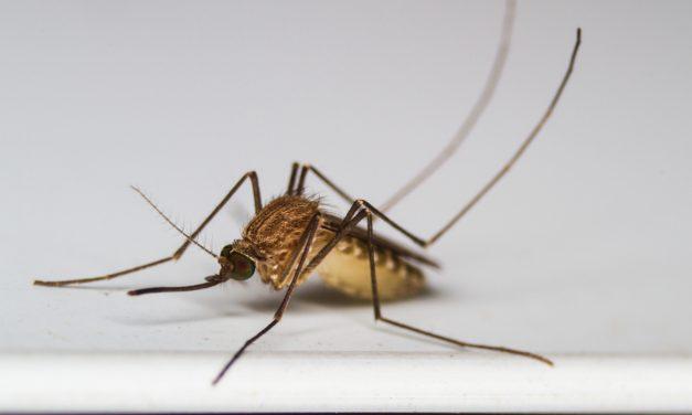 Hoe hou je muggen en vliegen buiten?