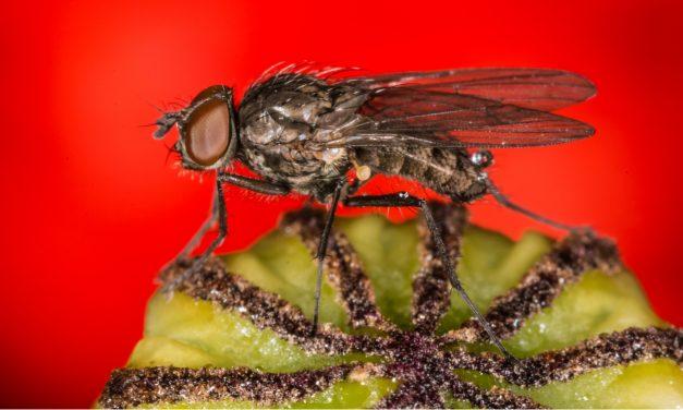 Hoe hou je insecten en fruitvliegjes uit je huis?