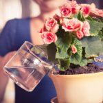 Hou je planten langer gezond met het juiste water