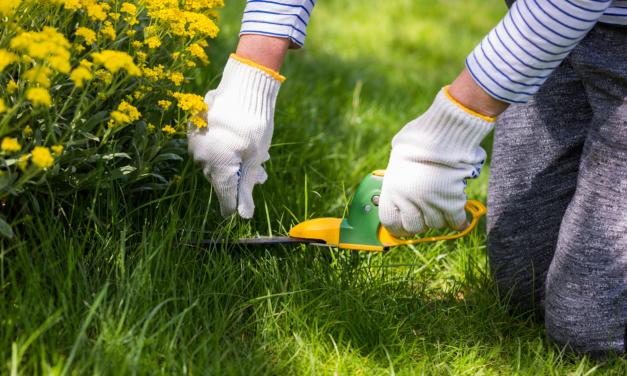 Mag je in de tuin werken als je in ziekteverlof bent?
