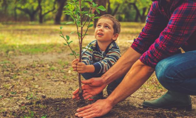 Wanneer moet je bomen planten: het voorjaar of het najaar?