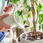 Bruine randen en vlekken op je kamerplanten? Verander van water!