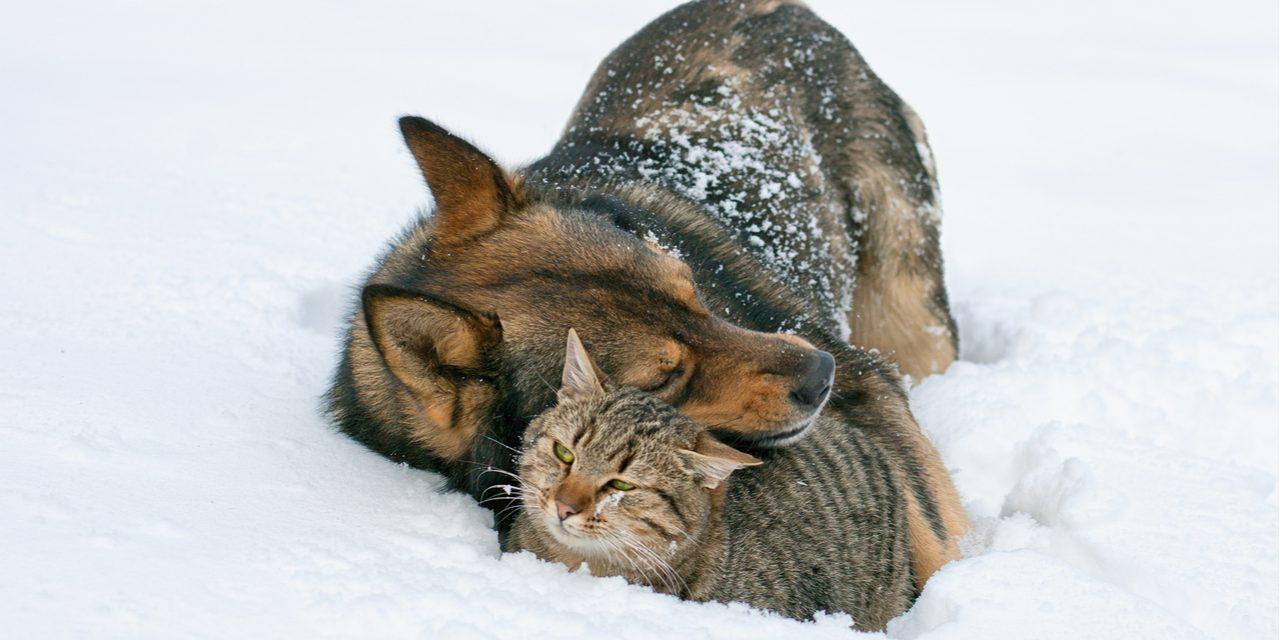 Waarom houdt je hond of kat niet van de winter?