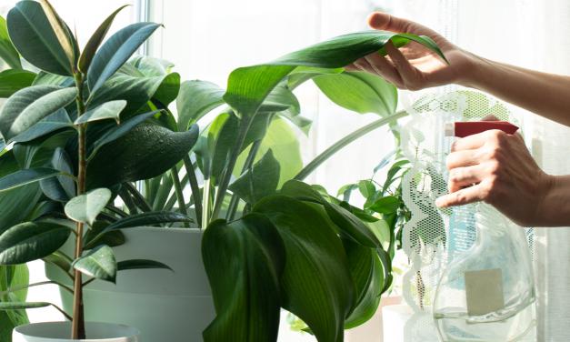 Verzorg je planten milieuvriendelijk: Natuurlijk wapen tegen bladluizen