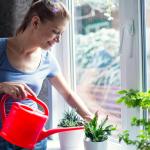 Maak je planten blij met zelfgemaakt goedkoop plantenvoedsel