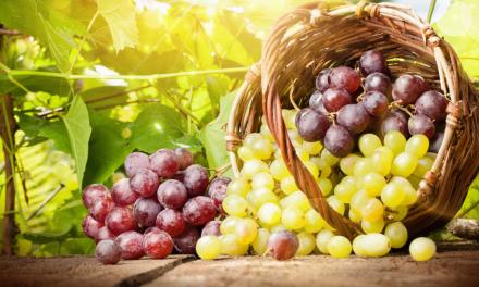 Hoe kun je dure druiven langer vers houden?