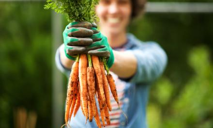 Verse worteltjes: heerlijk! Maar hoe hou je ze langer vers?