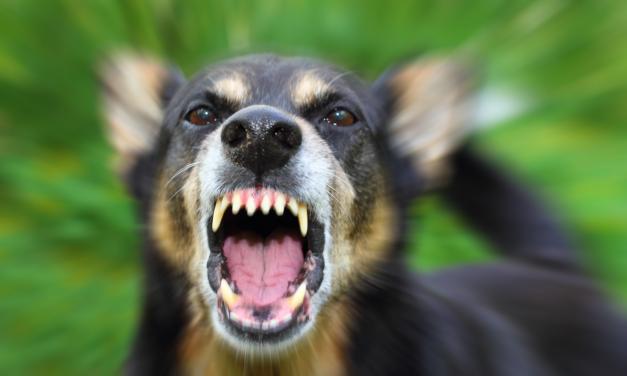 Wanneer is een hond gevaarlijk?