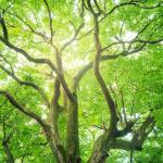 Gezonde kracht uit de natuur